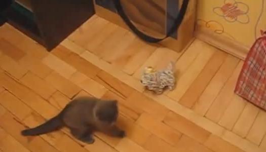 ネコの必殺技
