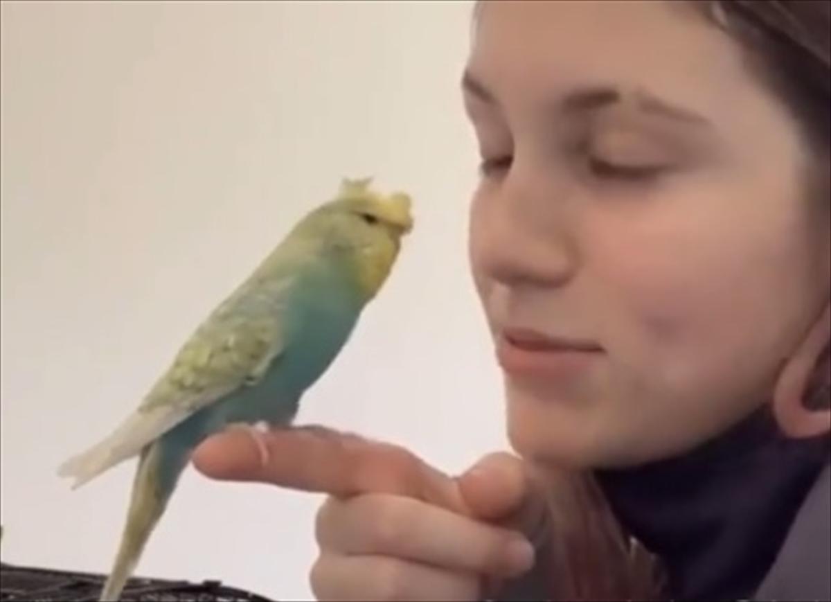 インコ 噛む セキセイ